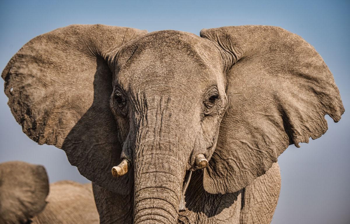 Do You Speak Elephant?