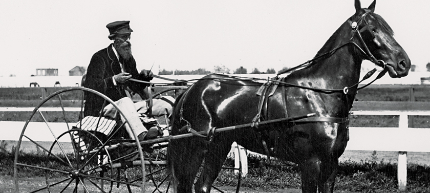 What You Don't Know About Leland Stanford's Horses