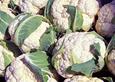 Heads of cauliflower