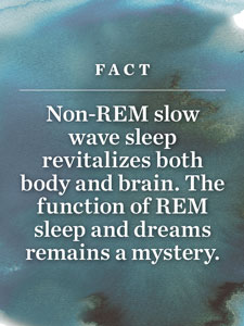 Fact: Non-REM slow wave sleep revitalizes both body and brain. The function of REM sleep and dreams remains a mystery.
