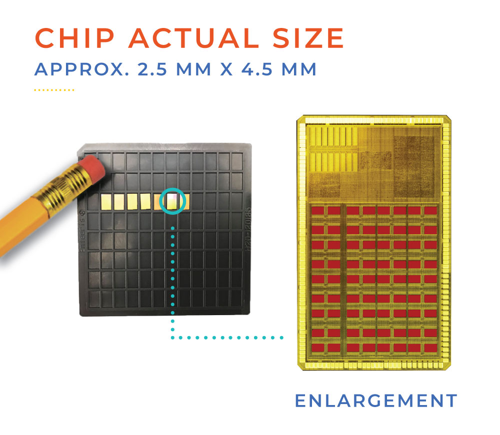 Image of chip compared to the head of a pencil eraser, and an enlargement of the chip.