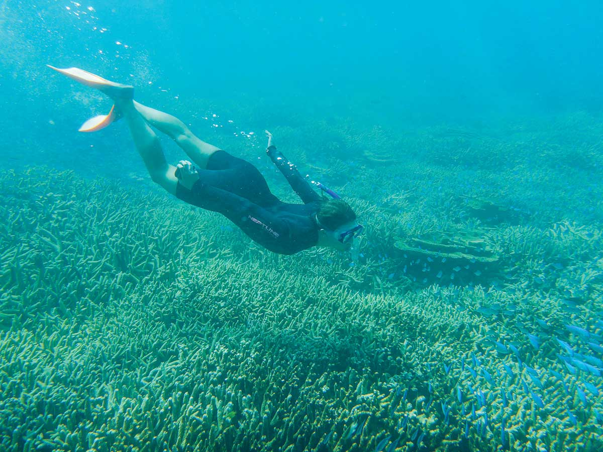 "FISH SCHOOL: Mekler snorkels over the Great Barrier Reef near Heron Island in 2015. ""The highlight of the program in Australia is the opportunity to learn about environmental sciences while being fully immersed in the environment,"" Mekler says."