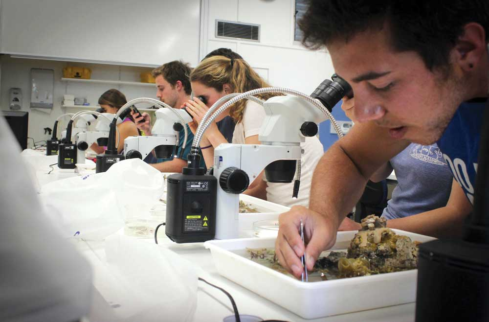 Jonathan Fisk, '16, MS '17, and other students examine reef samples and collect microscopic animals in 2014.