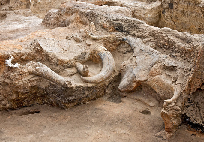 Amidst a cluster of short, rocky ledges, a bison skull and several horns are found scattered, buried partly within the stone.
