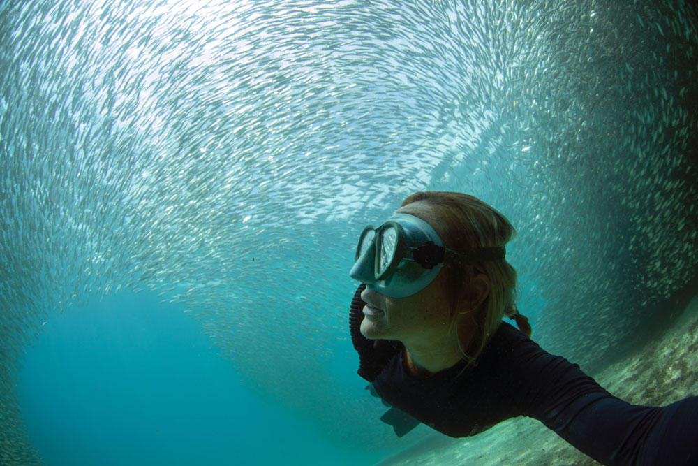 Diver swimming underneath a school of fish in the ocean.