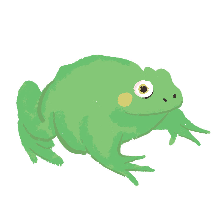 Illustration of a bullfrog sitting.