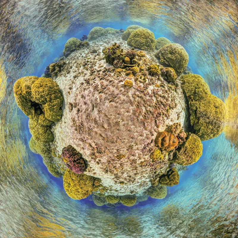 A 360-degree view of a coral-colonized piece of seafloor. Most of the corals form large yellow domes.
