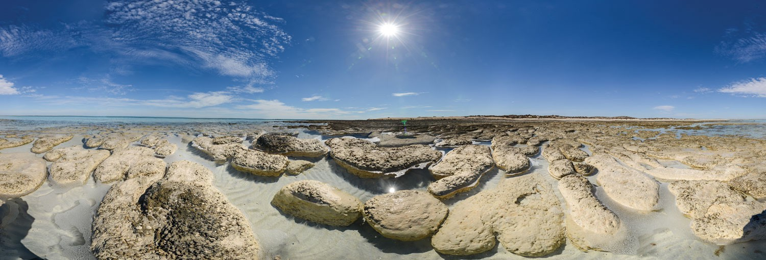Large, slab-like objects cover shallow water for as far as the eye can see.