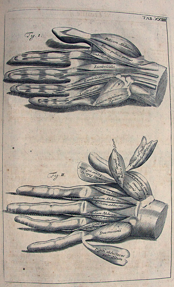 A page from an old book with complicated diagrams of hands and their muscles. The second hand deconstructs the muscles in the first into subgroups.
