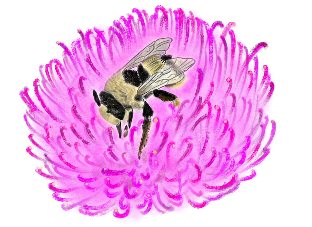 An illustration of a diggerbee on a flower