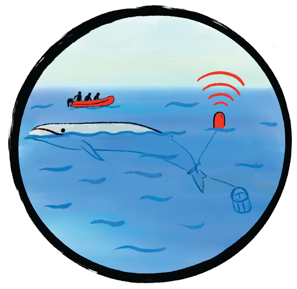 Illustration of a whale with a detecting device and a boat with three figures on it